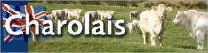 British Charolais Cattle Society